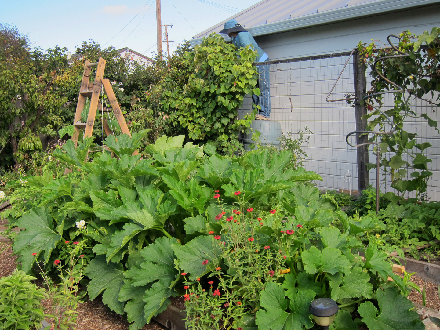 Summer garden for Summer vegetable garden