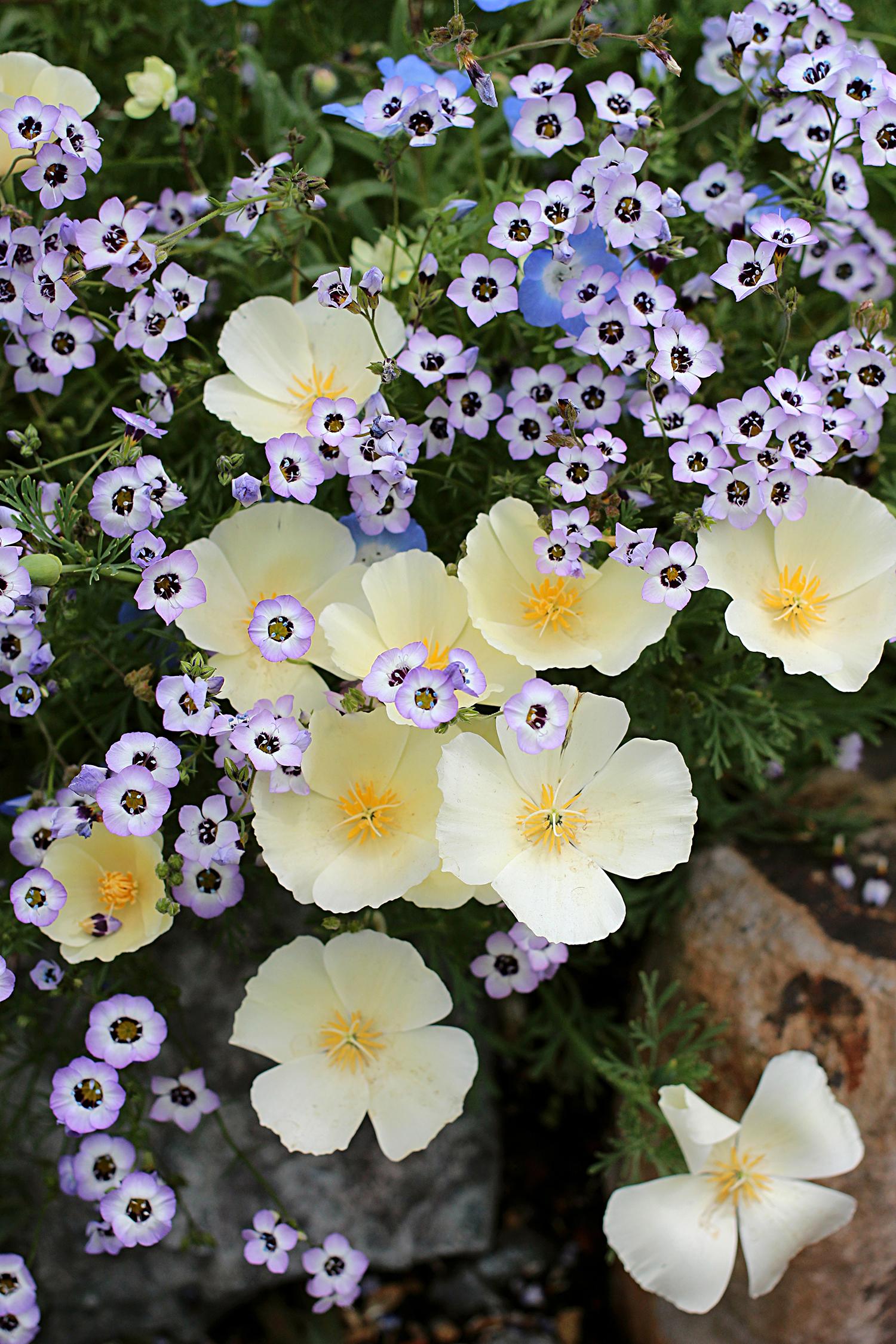 Rare Heirloom Unusual Plants